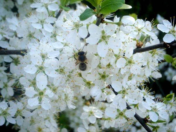 A Spring Bee